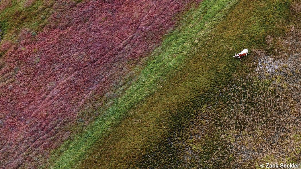 Aerial photography transforms South African terrain into abstract art