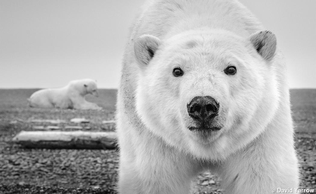 Photo gallery: David Yarrow's animal encounters