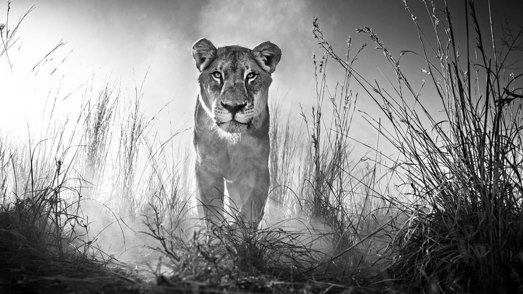 Safari photography tips