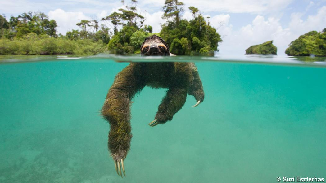 New photo book of sloths melts hearts, educates