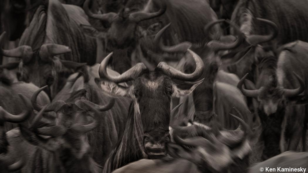Ken Kaminesky photographs the great migration