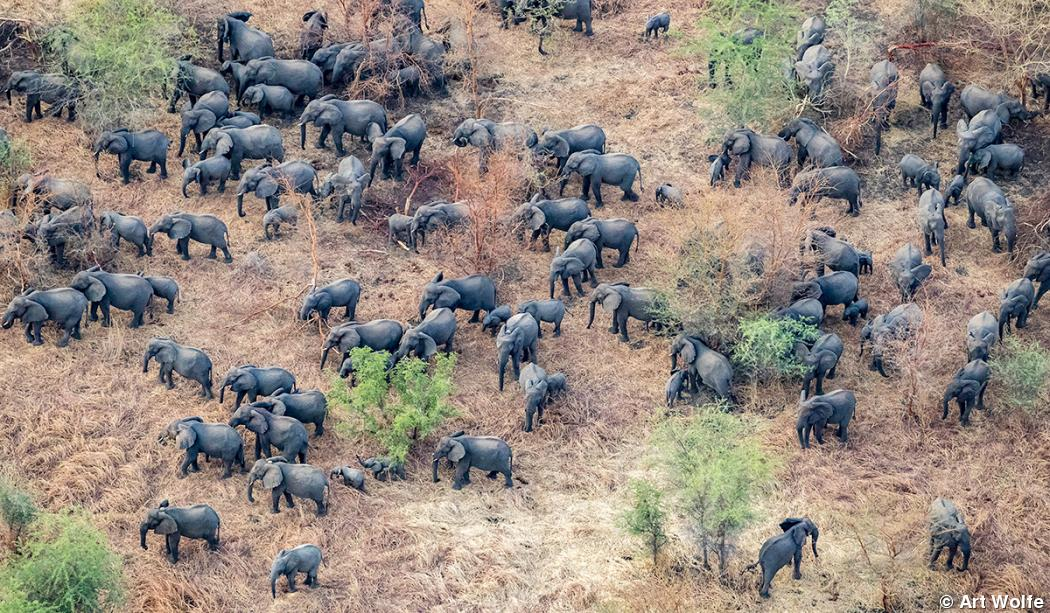 Art Wolfe photographs megaherd of elephants