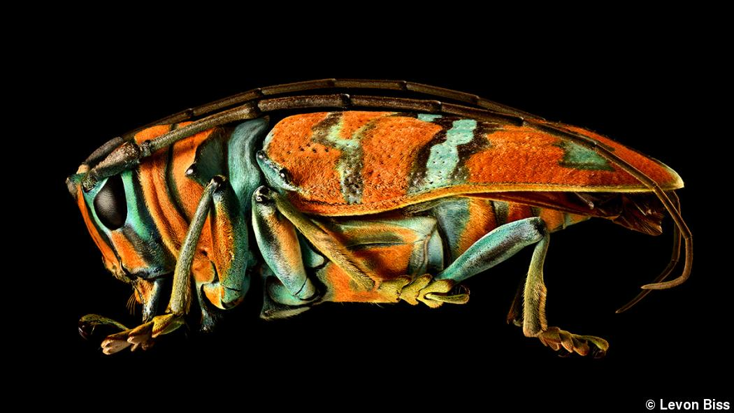 A project with legs: Levon Biss' larger-than-life bug portraits